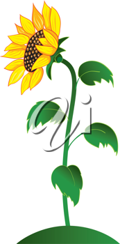 Royalty Free Clipart Image of a Sunflower