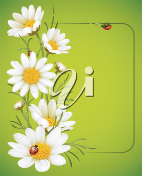 Royalty Free Clipart Image of a Camomile Frame