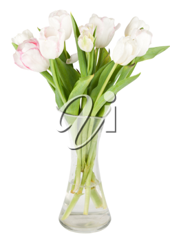 Royalty Free Photo of a Vase of Tulips