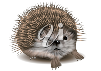 hedgehog on a white background. 10 EPS