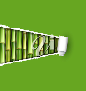 Green bamboo grove with ripped paper frame isolated on white background