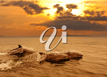 Royalty Free Photo of Three Dolphins Swimming
