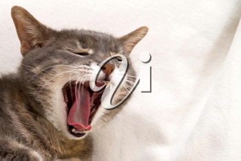 A cat yawning on a white sofa